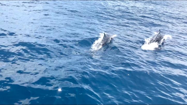 Spotted dolphins near Sámara, Costa Rica