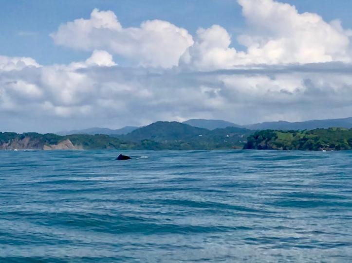 Whale near Sámara, Costa Rica
