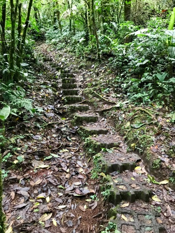More WOW in Monteverde Cloud Forest, Costa Rica