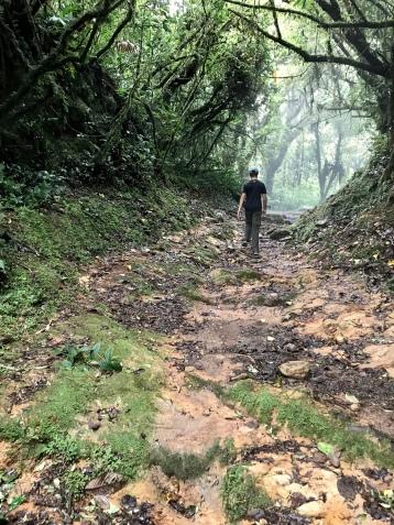 Bird Nerd on the trail in Monteverde Cloud Forest, Costa Rica. Stunning!