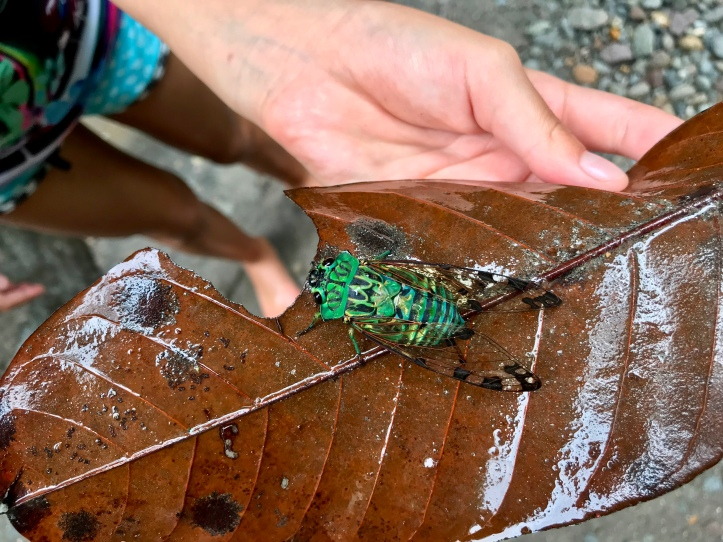 Cool bug near La Fortuna Waterfall