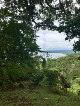The views of Lake Arenal from the hill where the tree is located are gorgeous!