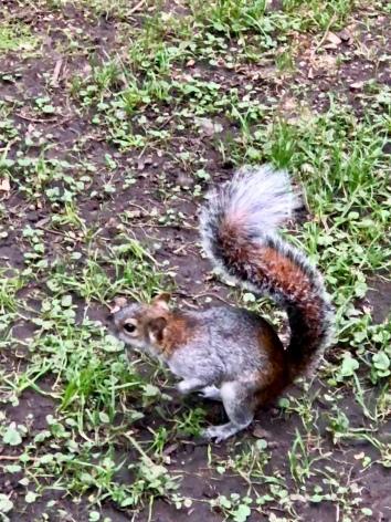 More squirrels at Viveros de Coyoacán.