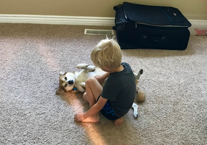 """Rafi the dog was one of three dogs at our very first """"official"""" housesit!"""